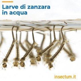 Disinfestazione larve di zanzara