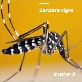Disinfestazione Zanzara tigre