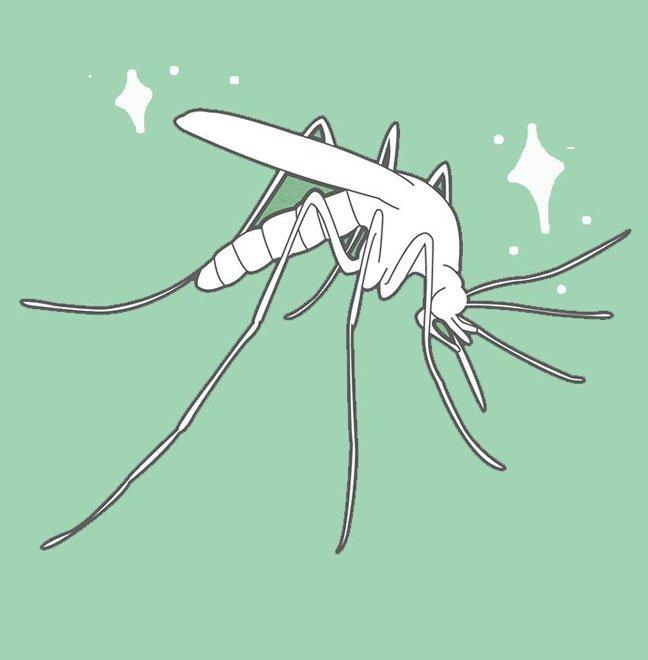 Prodotti Insetticidi Alati Insectum