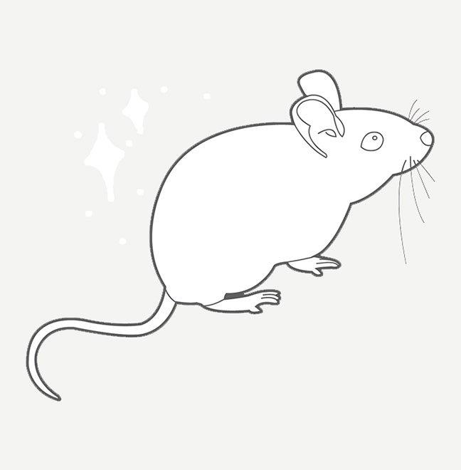 Prodotti Derattizzazione Topi Ratti Roditori Insectum