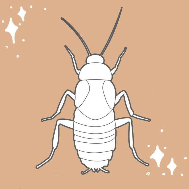 Prodotti Insetticidi Insetti Striscianti Insectum