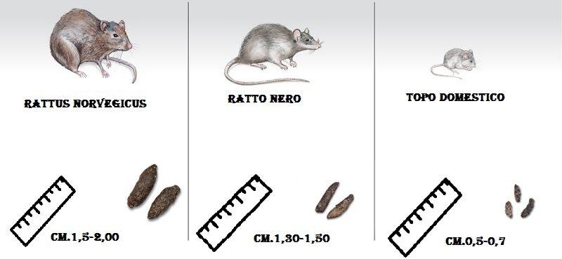 Differenze cacca topo e ratto